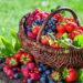 11 sekretów uprawy smacznych truskawek